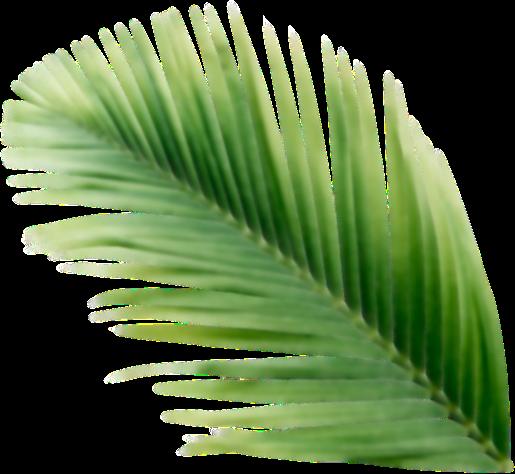 Hja de palmera difuminada