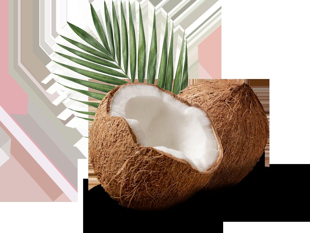 Coco con hoja de palmera detrás