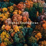 Tintas ecológicas para impresión y tintas de baja migración: características y beneficios